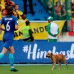Un perro fue el protagonista en el partido Colombia-Brasil