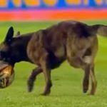 Perro policía se roba balón en pleno partido