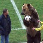 Un oso hizo el saque de honor de un partido en Rusia