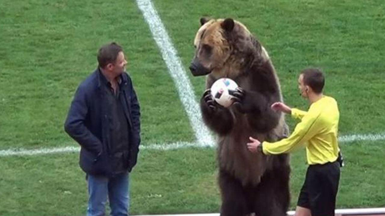 Un oso hizo el saque de honor de un partido de tercera división en Rusia